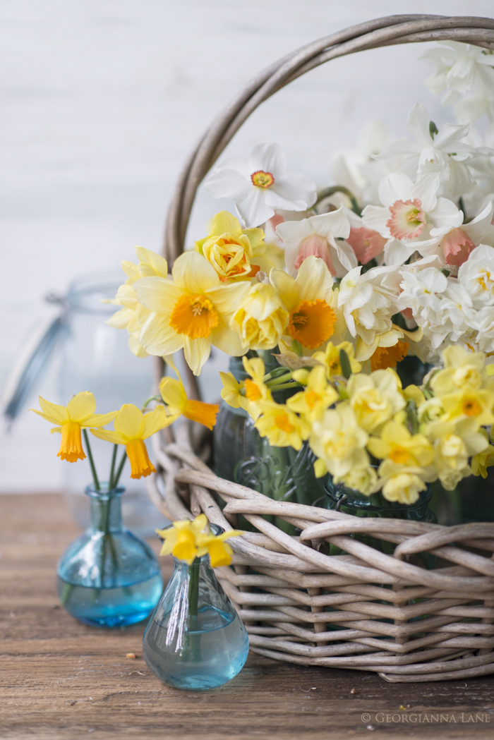 Narcissus in basket by Georgianna Lane
