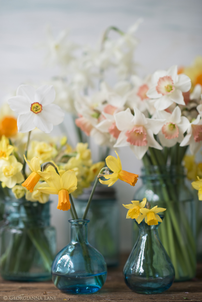 Narcissus in Blue Jars by Georgianna Lane