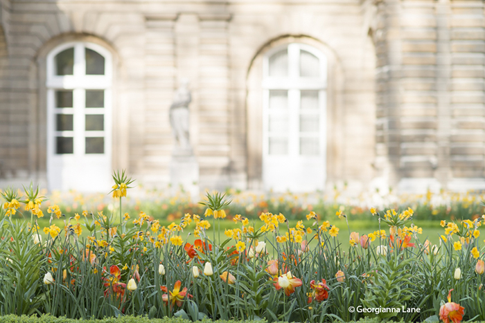 Spring at Jardin du Luxembourg by Georgianna Lane