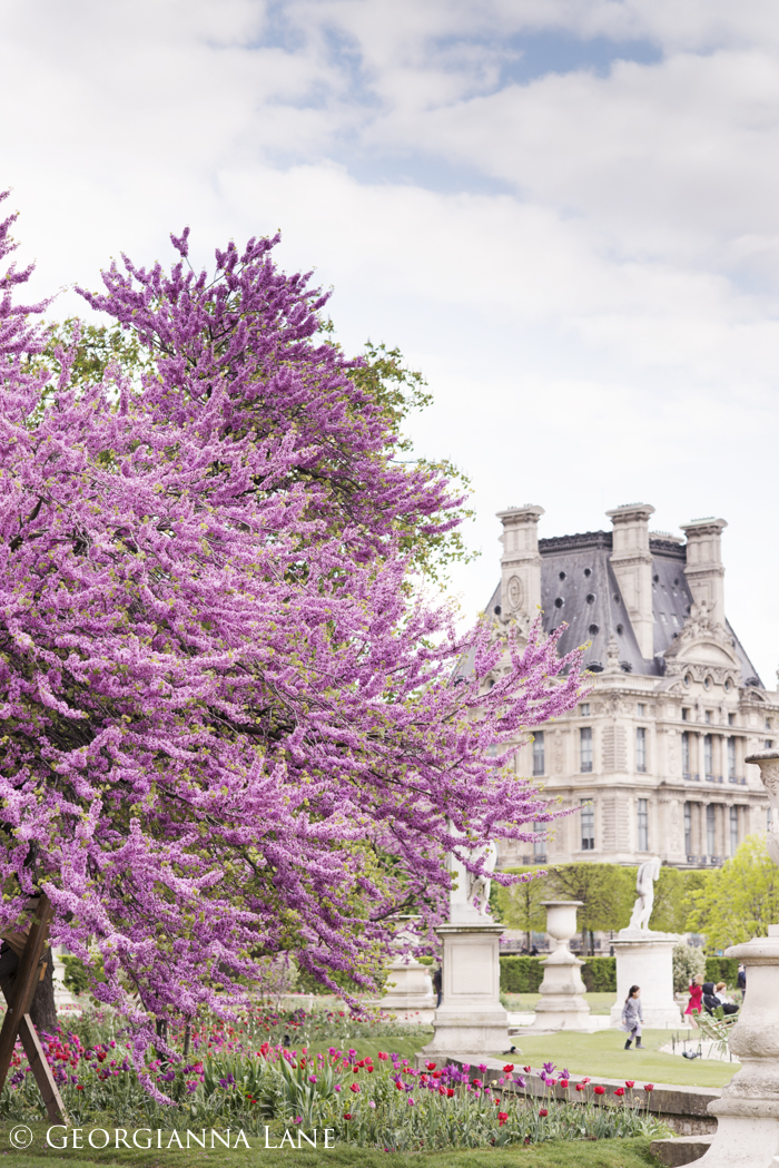 Blossoms in The Tuilieries, Paris, by Georgianna Lane