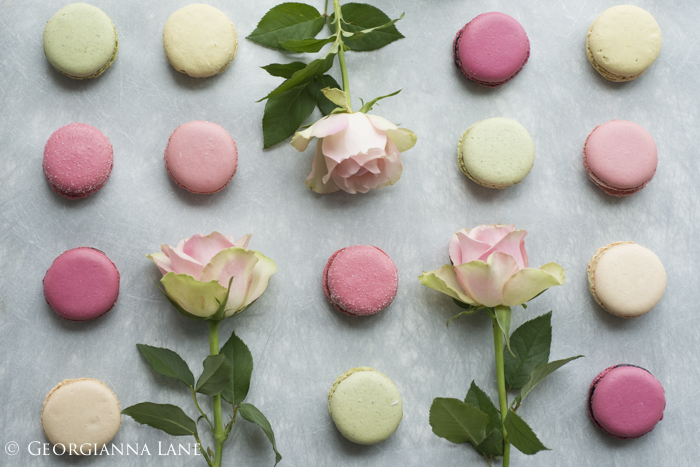 Paris Macarons and roses photographed by Georgianna Lane
