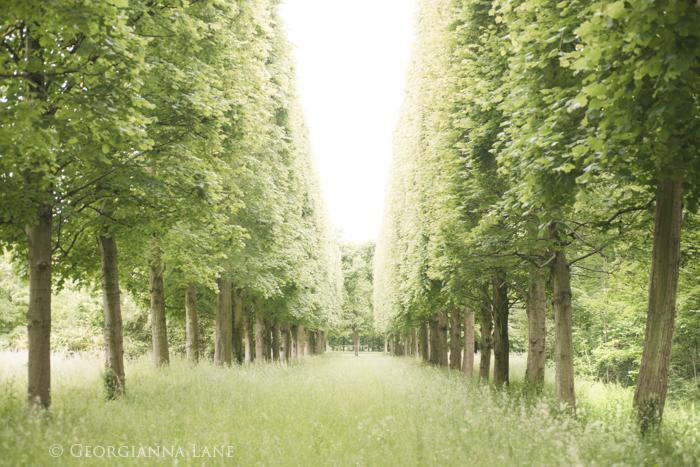 Allee of Trees, Versailles by Georgianna Lane