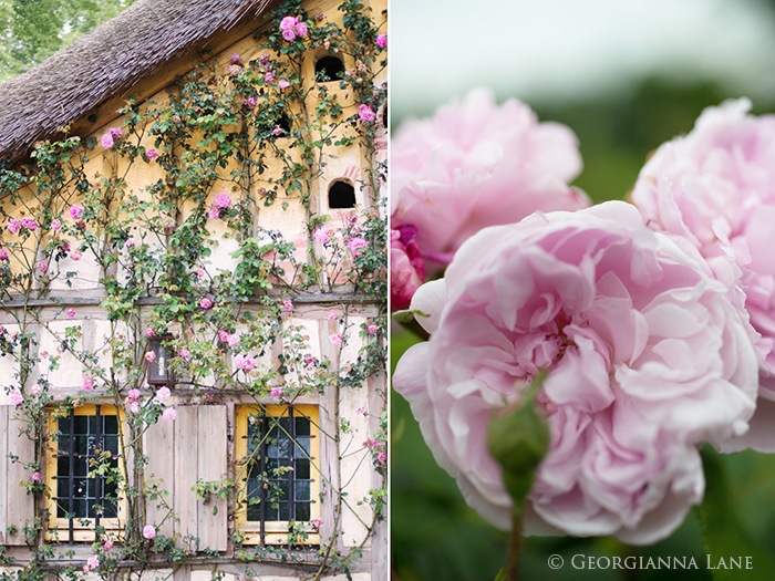 Dovecote and roses, Versailles, France by Georgianna Lane