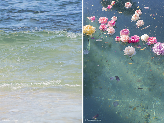 Floating Roses and the Coast of Central Chile by Georgianna Lane