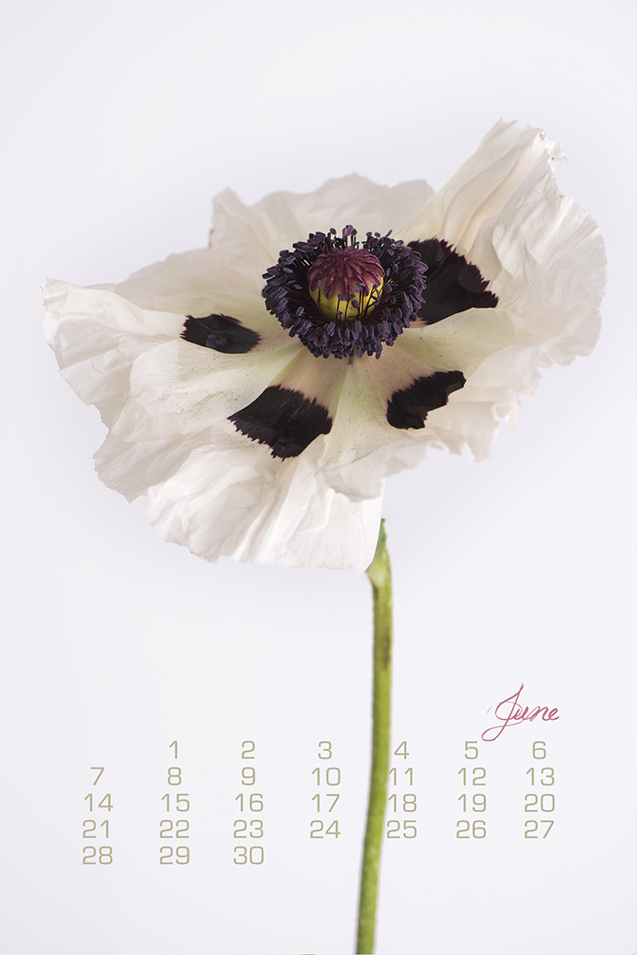 Poppy, Botanical Calendar by Georgianna Lane