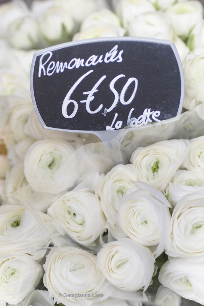 White ranunculus, Paris, by Georgianna Lane