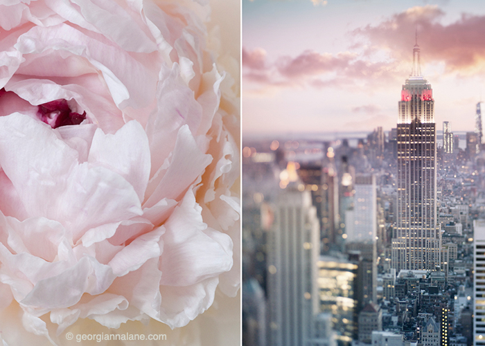 New York and Peony by Georgianna Lane
