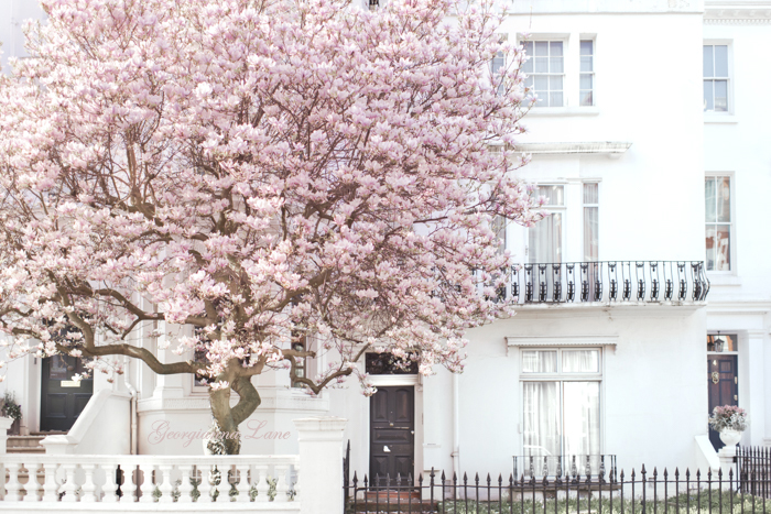 Pink Magnolia, Notting Hill, London by Georgianna Lane