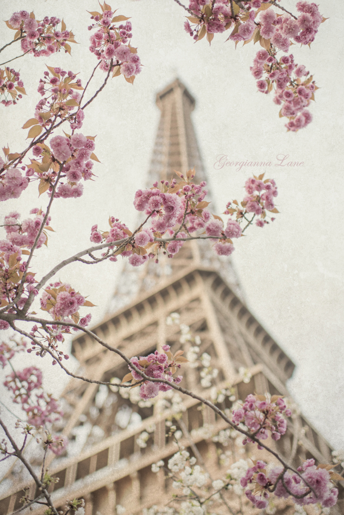The Eiffel Tower, April, by Georgianna Lane