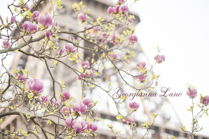 Magnolia Blossoms, Eiffel Tower, Paris by Georgianna Lane