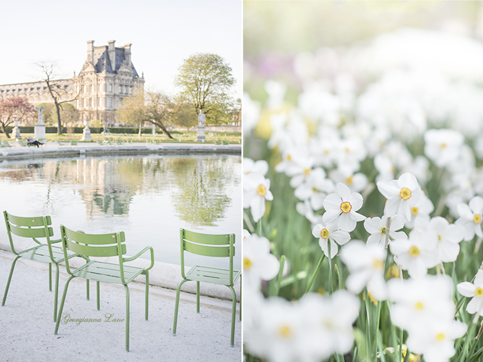 Tuileries at Dawn; narcissus at Jardin du Palais Royal, Paris by Georgianna Lane