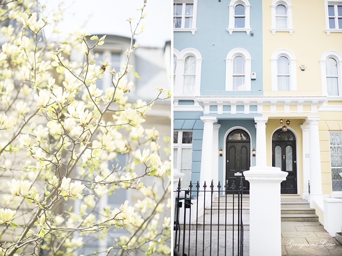Yellow Magnolia, Paris; Pastel Houses, Notting Hill, London by Georgianna Lane