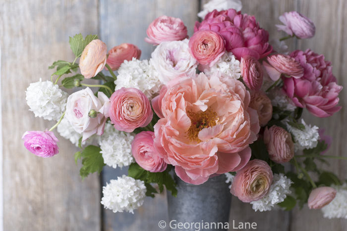 Pink Hawaiian Charm peonies by Georgianna Lane