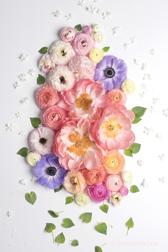 Coral Charm peonies, ranunculus and anemones by Georgianna Lane