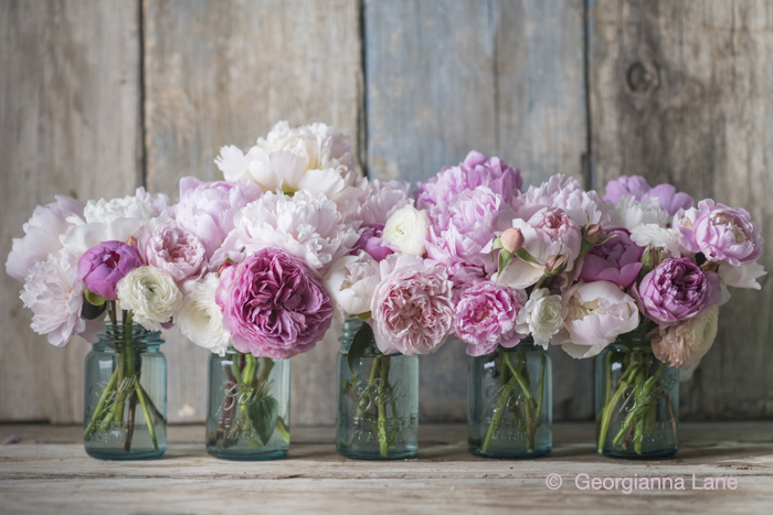 Peonies, David Austin roses and ranunculus in Mason jars by Georgianna Lane