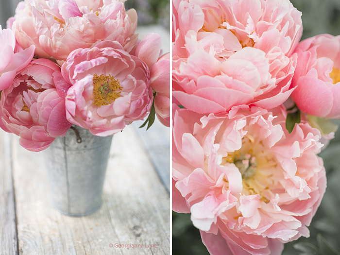 Coral Charm Peonies by Georgianna Lane