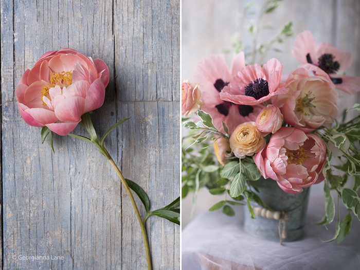 Coral Charm peonies, ranunculus and poppies by Georgianna Lane