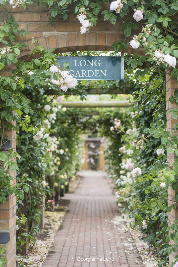 The Long Garden, David Austin Roses, England, by Georgianna Lane