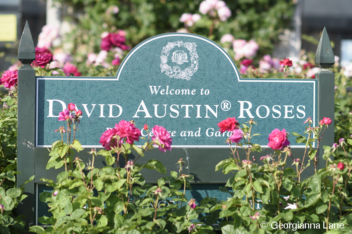 David Austin Rose Center photographed by Georgianna Lane