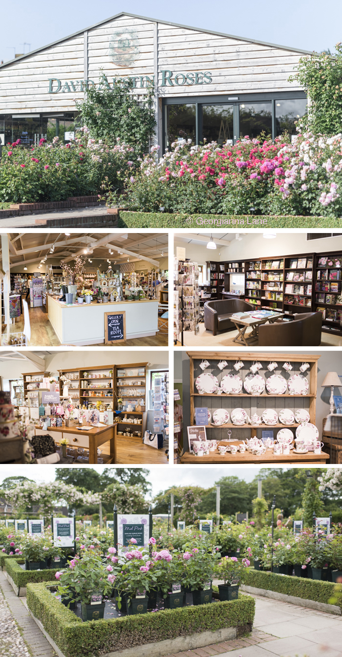The Gift Shop and Plant Center, David Austin Roses, England, by Georgianna Lane