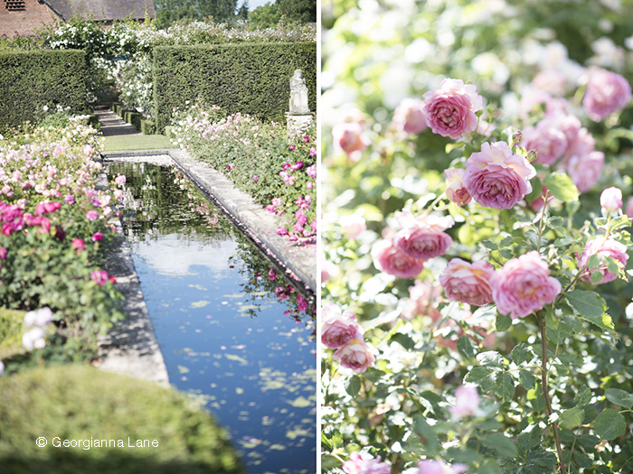 The Renaissance Garden, David Austin Roses, England, by Georgianna Lane