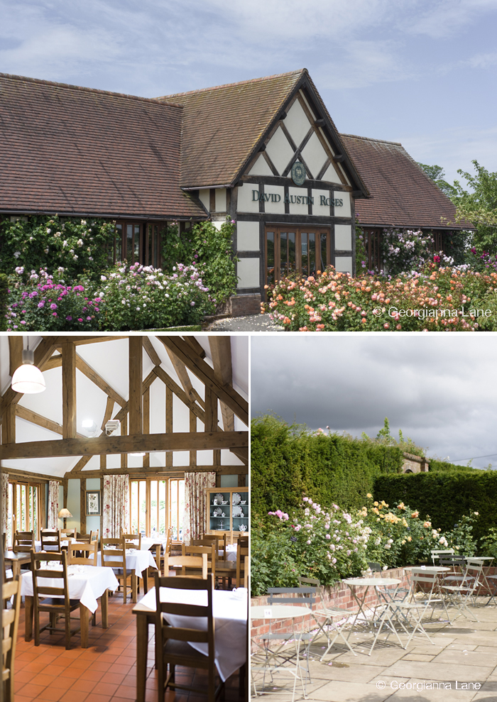 The Restaurant, David Austin Rose Center, England, by Georgianna Lane