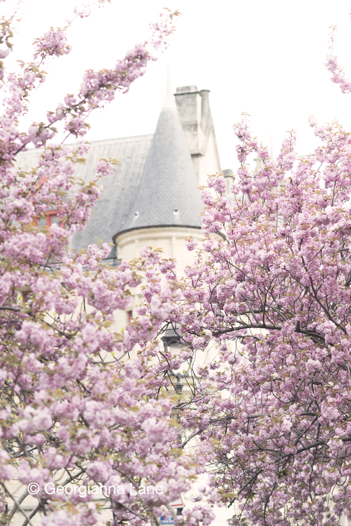 Cherry Blossoms, Paris by Georgianna Lane