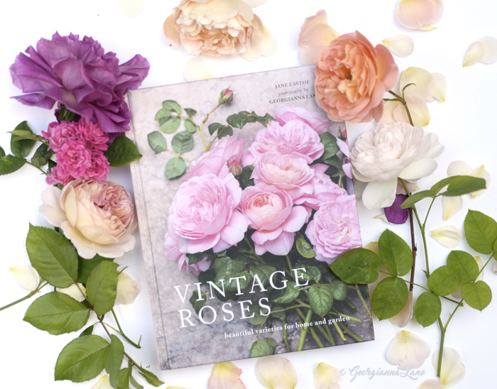 Vintage Roses, photography by Georgianna Lane