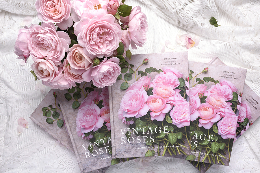 Vintage Roses, photographed by Georgianna Lane