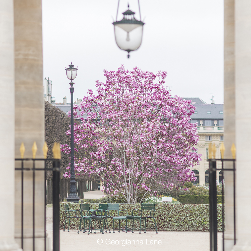 Palais Royal, Paris, in spring by Georgianna Lane